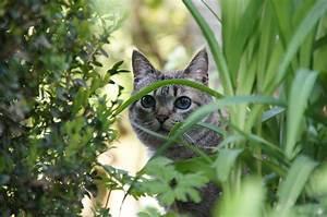 katzen vertreiben die besten hausmittel katzen With französischer balkon mit katzen aus garten vertreiben
