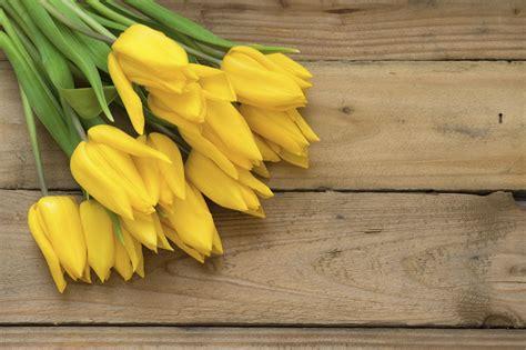 bedeutung gelbe blumen und ihre symbolik valentinstag 2019