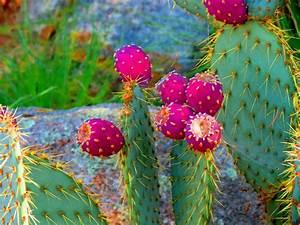 Cactus HD Wallpaper PixelsTalk Net