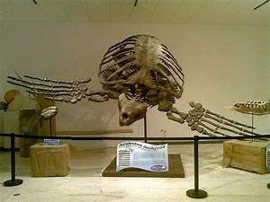 A giant prehistoric turtle that reached almost to the ...
