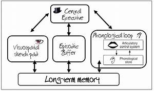 The Working Memory Model  Central Executive  Phonological
