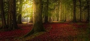 Landscape, Nature, Colorful, Forest, Fall, Trees, Path