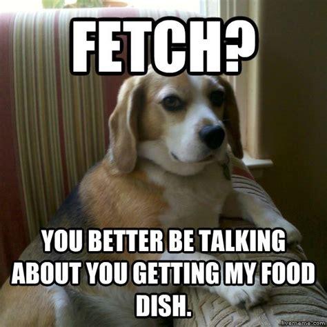 Doggy Meme - judgmental dog
