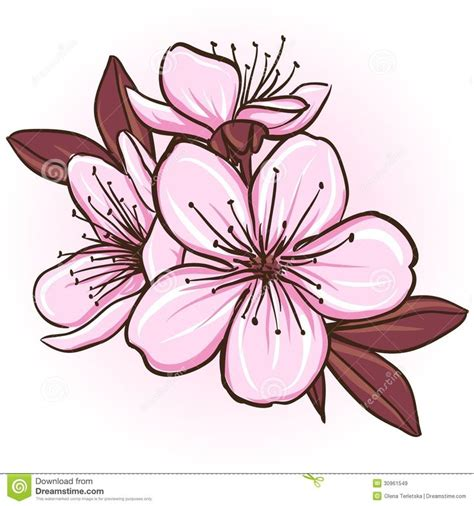 80 best Cherry blossom vector clipart png images on