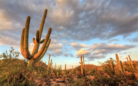 weather arizona warm sunny tucson destinations holiday travel michele falzone getty park travelandleisure