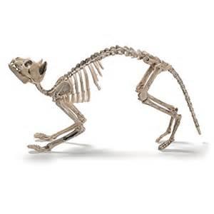 cat skeleton prextex cat skeleton best decoration ebay