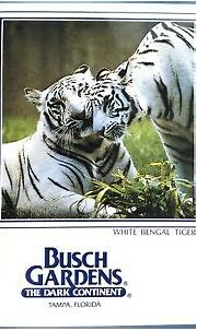 White Bengal Tiger Busch Gardens, Tampa, Florida. (1985 ...