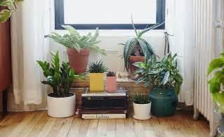 352 best windowsill plants images on