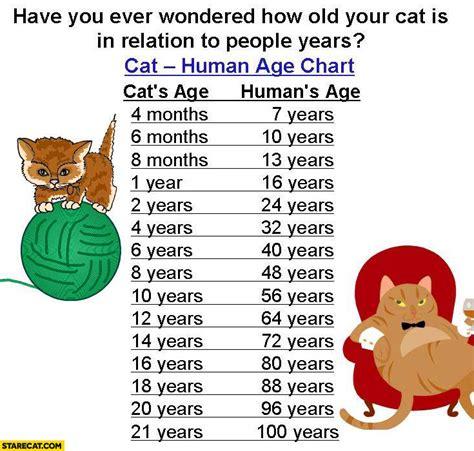 cat years chart pin cat age chart on pinterest