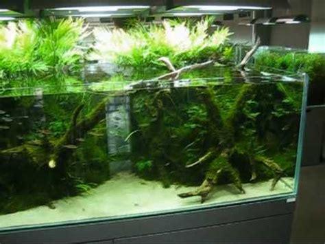 aqua design amano nature aquarium gallery