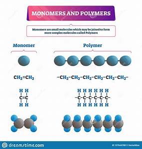 Monomer Or Polymer Vector Illustration  Labeled Chemical