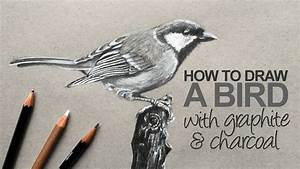 How to Draw a Realistic Bird - YouTube