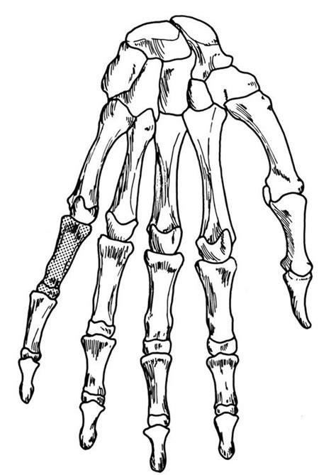 Kleurplaat Skelet Mens by Kleurplaat Skelet Afb 18906 Images