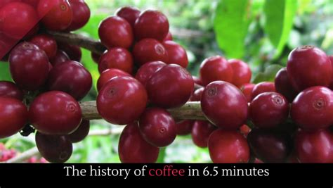 The History Of Coffee In 6.5 Minutes