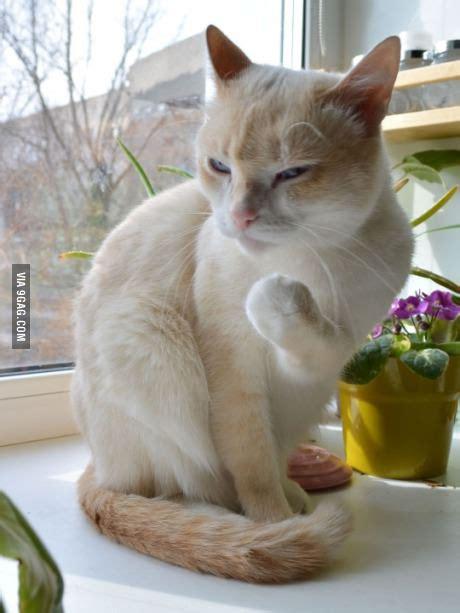 Success Cat Meme - evil success cat blank template imgflip