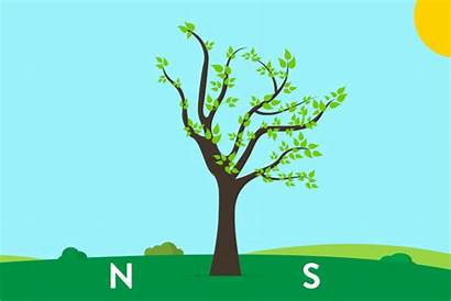 Tree Plants South Which Animated Using Gifs