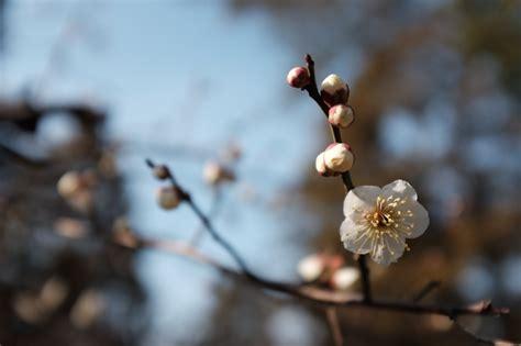 วอลเปเปอร์ : ญี่ปุ่น, แสงแดด, อาหาร, ธรรมชาติ, ฤดูหนาว ...