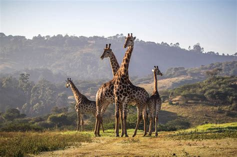 PheZulu Safari Park - What Where When