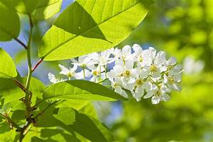 Weiß Blühender Strauch : wei bl hender strauch in den salzachauen foto bild ~ Lizthompson.info Haus und Dekorationen