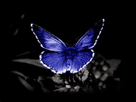 butterfly high definition wallpapers   page