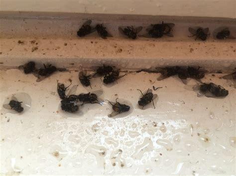 Nid De Mouche Maison nid de mouche dans la maison avie home