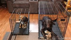 best dog crate parison