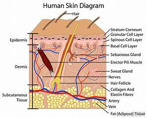 Skin layer diagram - ThingLink