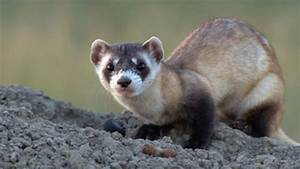 Animali domestici e selvatici: curiosità, storie e consigli