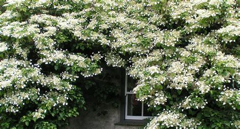 Clothe That Problem Shady Area In Flowers And Scent