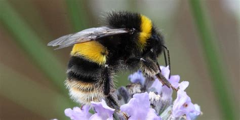 bee stings  wasp stings treatment tips