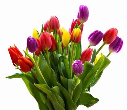 Tulip Bouquet Tulips Easter Transparent Flower Pixabay