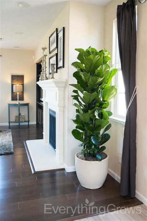 home design gallery sunnyvale interior landscaping by everything grows