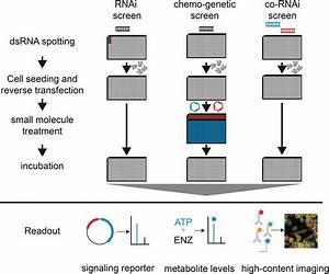 Rna Interference  Rnai  Screening In Drosophila