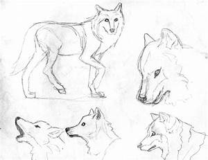 Wolf Front View Drawing At Getdrawings