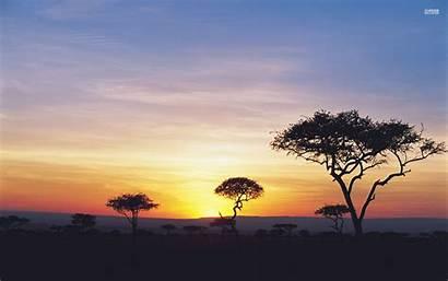 Safari Sunset Nice Dark Trees Wallpapers Desktop