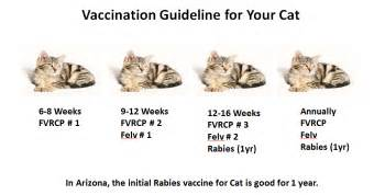 fvrcp vaccine cats vaccination for cats animal hospital