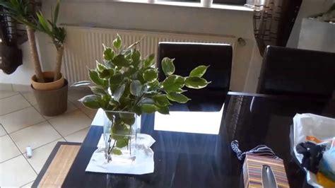 bonsai umtopfen anleitung bonsai selber machen aufziehen gestalten anleitung bonsai himself