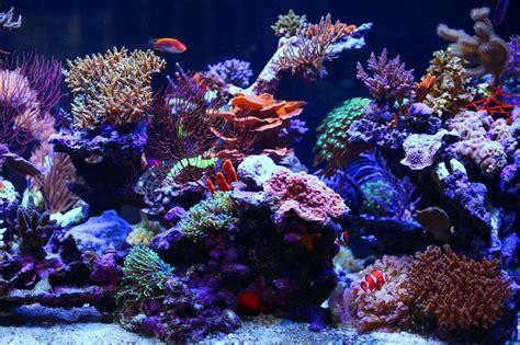 saltwater aquariums aquarium led lighting photos orphek