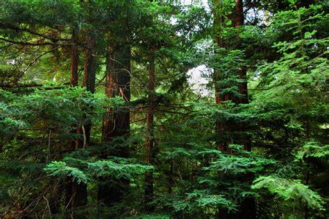 forest conservation forest conservation