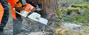 Baum Fällen Anleitung : wann darf ich b ume schneiden oder f llen baumpflegeportal ~ Yasmunasinghe.com Haus und Dekorationen