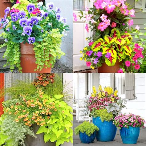 Colorful Flower Gardening In Pots ( 38 Designer Plant
