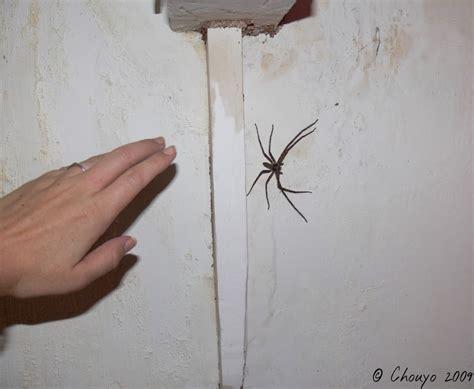 quand j ai des visions chouyo 39 s la nuit des araignées sauteuses koh lanta c est moi