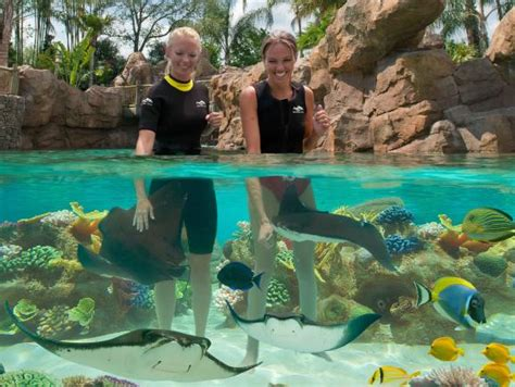 discovery cove orlando tickets buy discovery cove orlando tickets orlando ticket deals