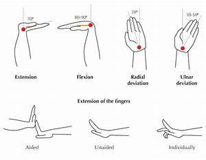 Rom Diagram Of Fingers