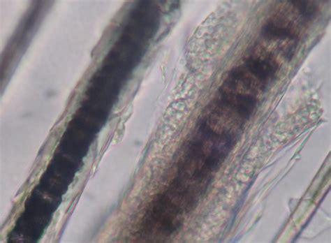 dermatologie clinique v 233 t 233 rinaire des docteurs martin granel beaufils jumelle calvisson