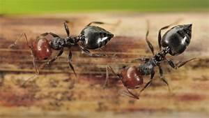 Ameisen Im Winter : ameisenhaltung was sie vor der anschaffung bedenken sollten ~ A.2002-acura-tl-radio.info Haus und Dekorationen