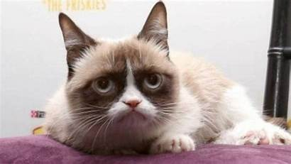 Cat Grumpy Died Cats Expressions Face Internet