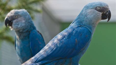 8 Bird Species, Including A Blue Macaw, Are Declared