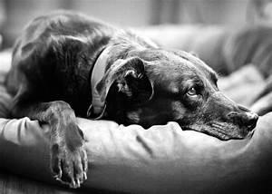 Black and Dog – Kyriolexy