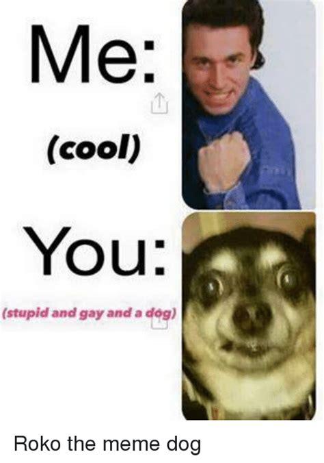 Gay Dog Meme - funny stupid memes of 2017 on sizzle bad memes